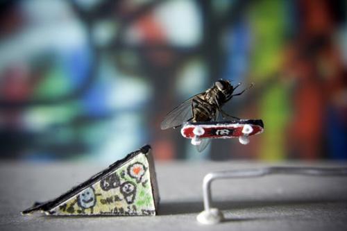 Fly Skateboarding