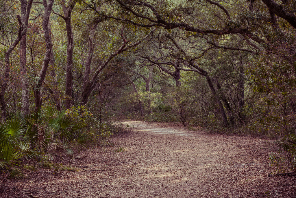 Silver Springs State Park Walking Trail