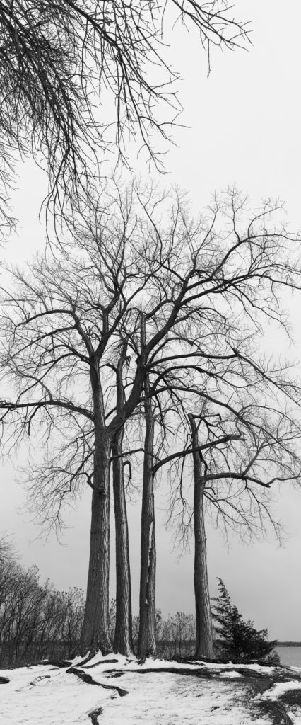 Four Tall Trees