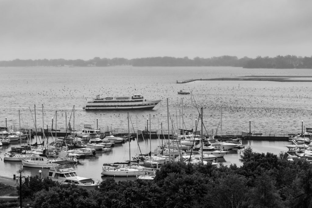 Boat And Flock Of Cormorants