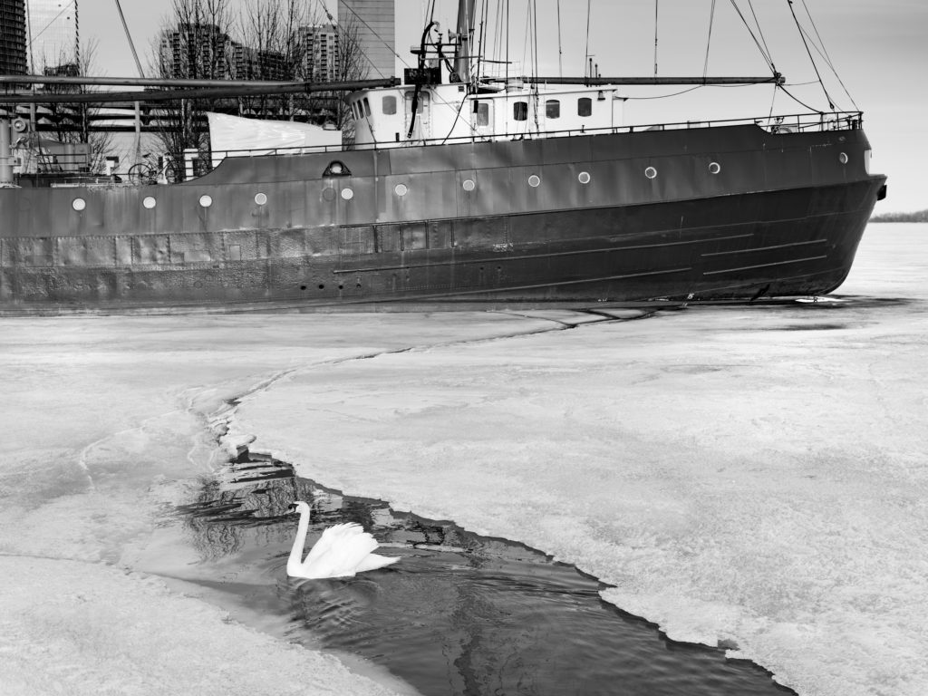 Swan And Tallship