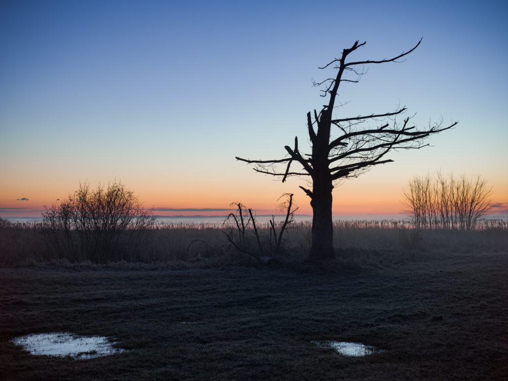Silhouette Of Tree Before Dawn