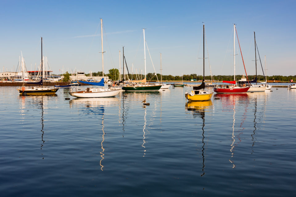 Canada Goose And Sailboats