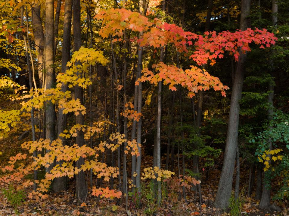 Fall Color At Smugglers Cove