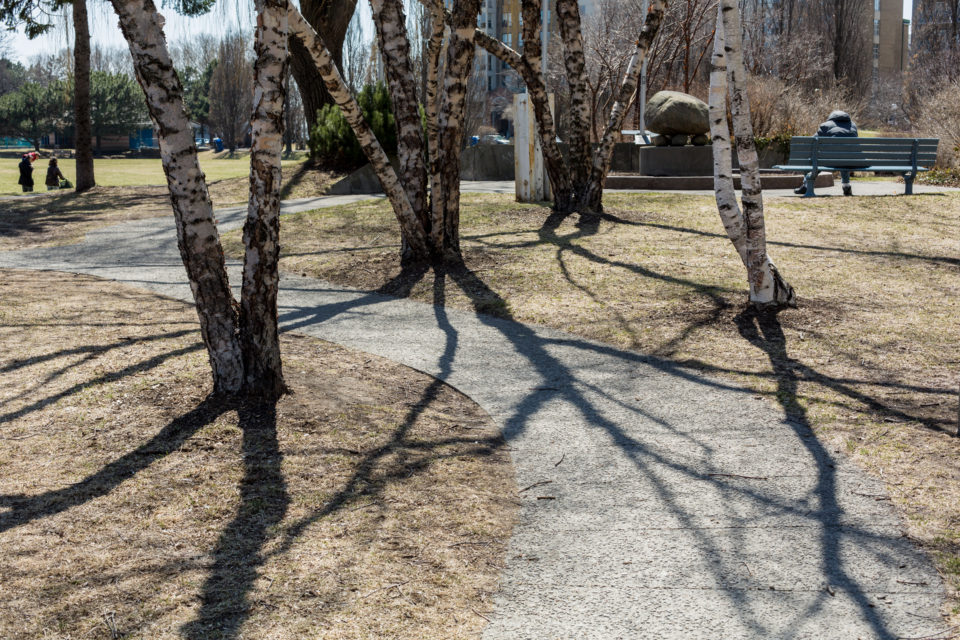 Pathway And Shadows Of Trees