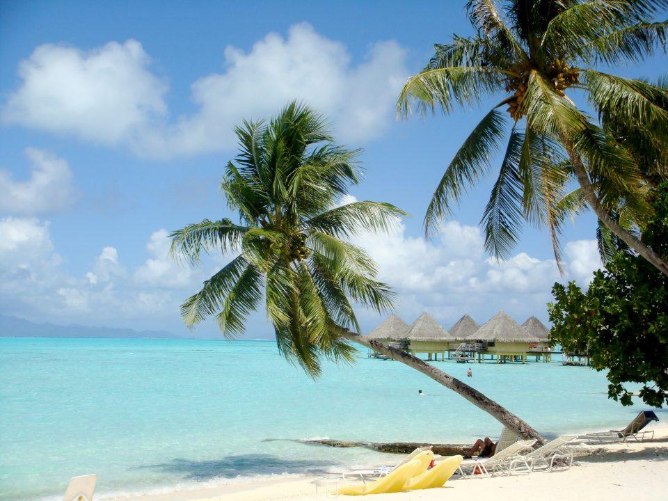 Tropical Island Palm Tree