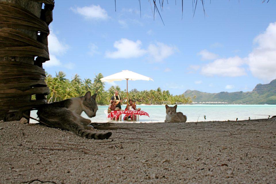 cats on bora bora island