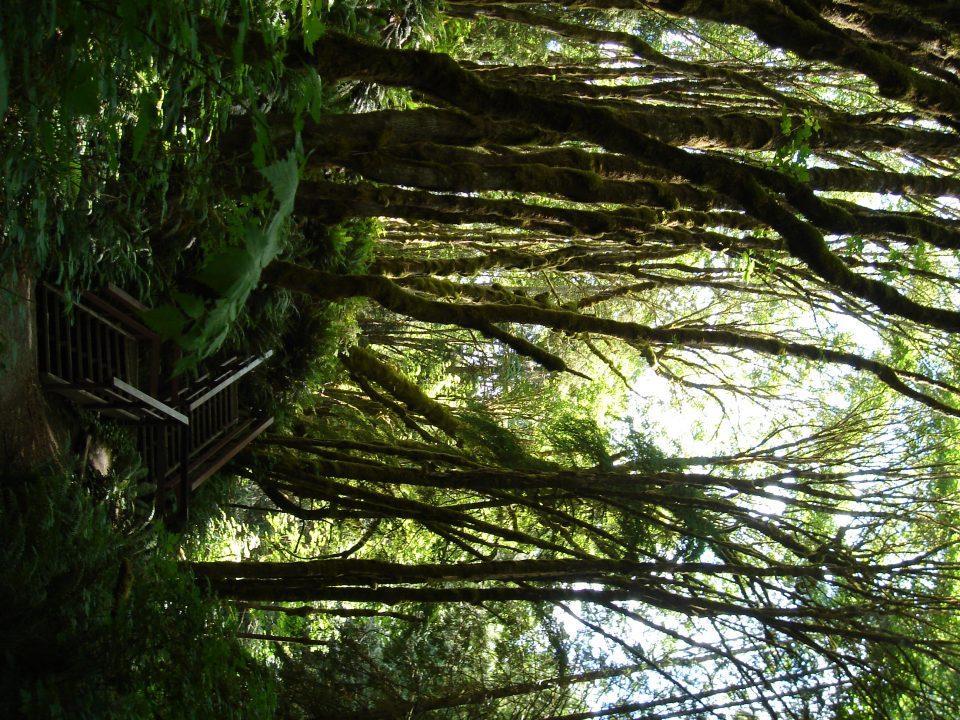 interesting trees