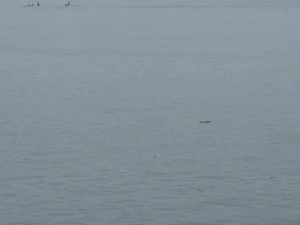 whales at 10X digital zoom