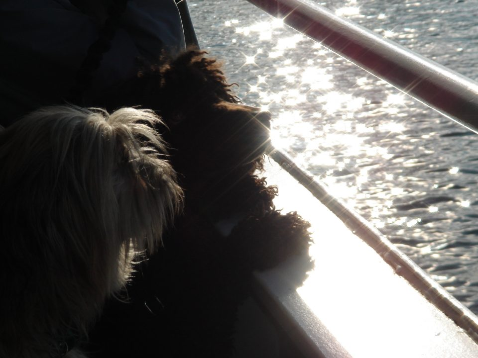 doggies look out the portal on the ferry