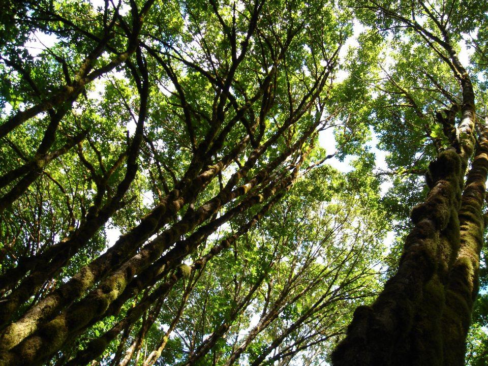 bending trees
