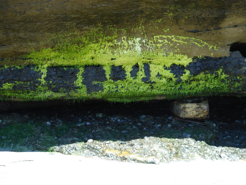 interesting moss on the cliffs at mystic beach