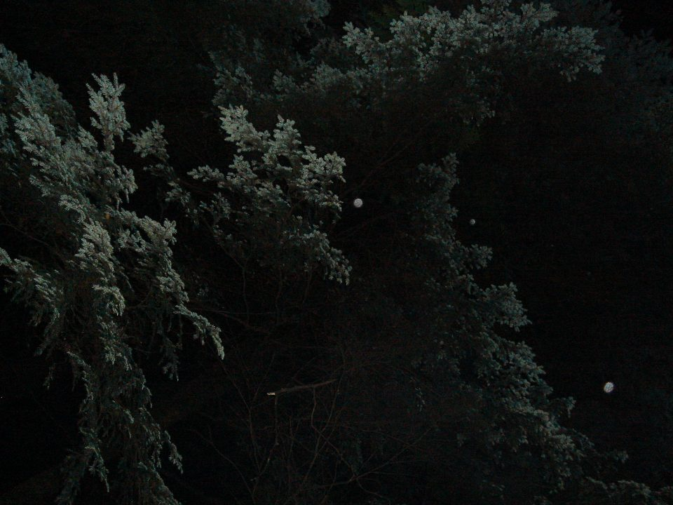 Spooky Trees at Night