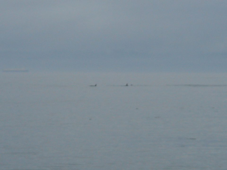 whales at 10X digital zoom