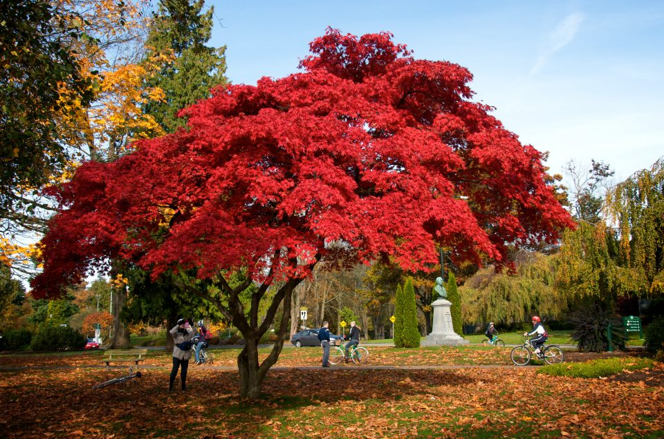 Bright Red Leaves On Tree Fall Colors