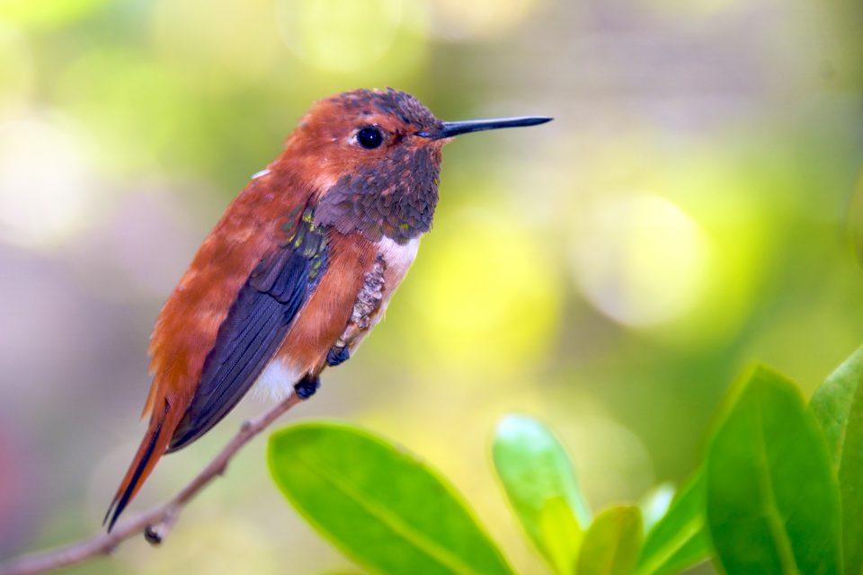 Humming Bird Has Tiny Feets