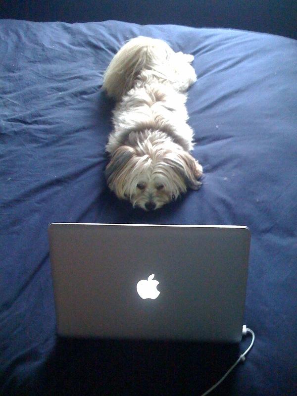dog using computer checkin mah mails, fap fap fap
