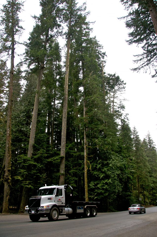 cathedral forest has tall trees