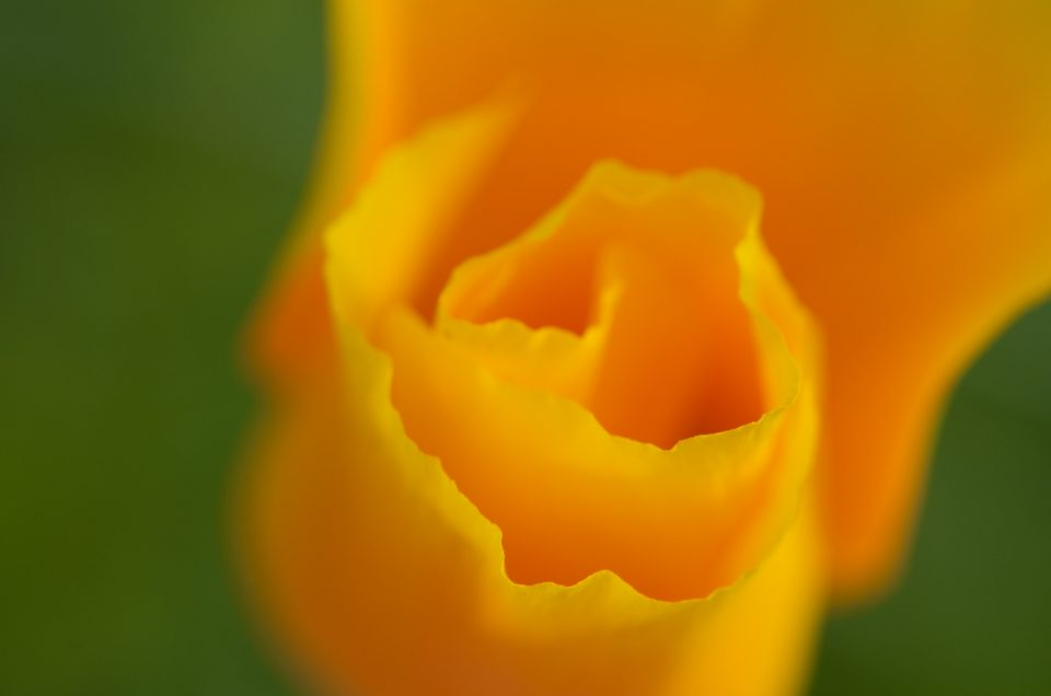 macro yellow flower