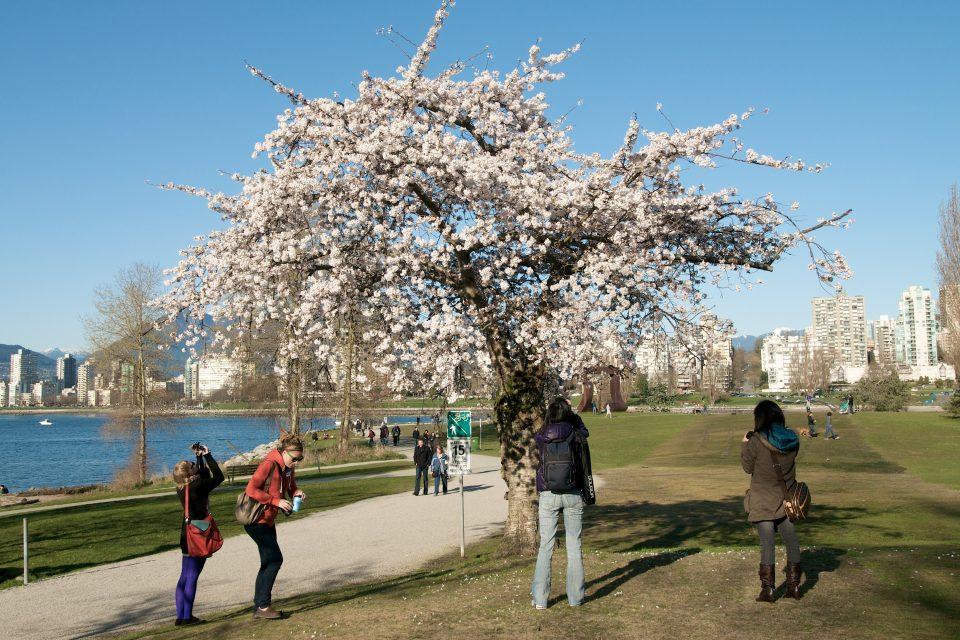 Photogenic Tree