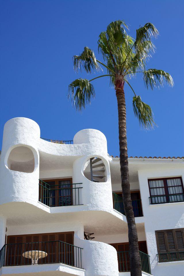 Palm Tree and Building Alcudia Majorca