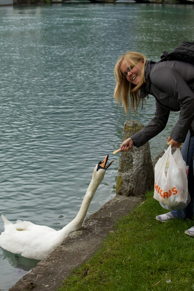 Dorothy Feeding a Swan in Interlaken