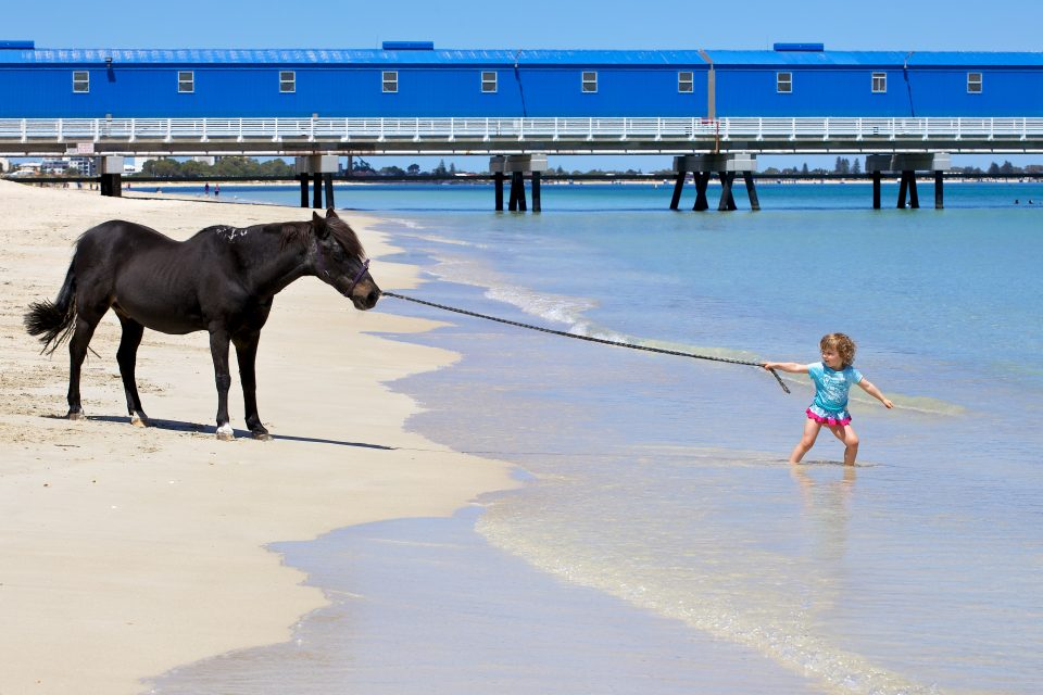 little girl trying to pull a horse into the ocean