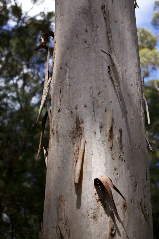 Treetop Walk Valley of the Giants, Denmark, Western Australia