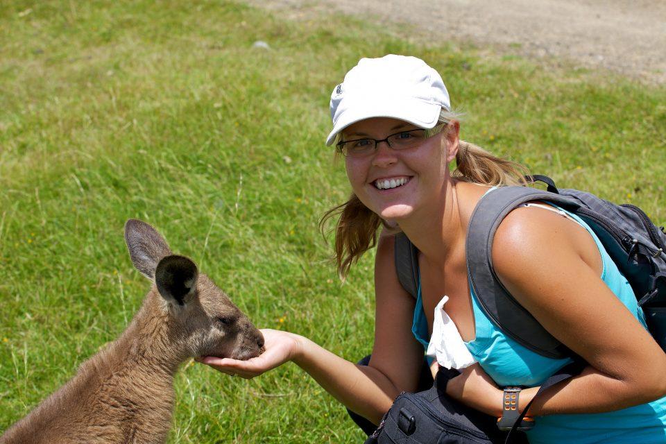 Kangaroo, Tasmania, Australia
