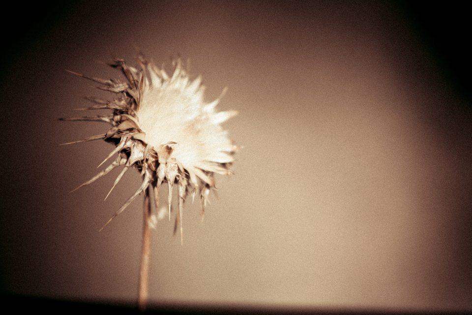 Grainy Bloom