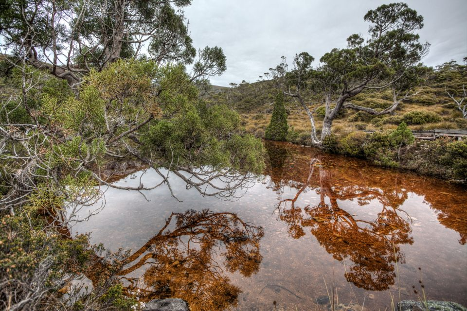 Colorful Pond Cradle Mountain Tasmania