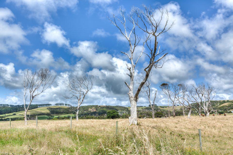 Landscape Green Point Tasmania