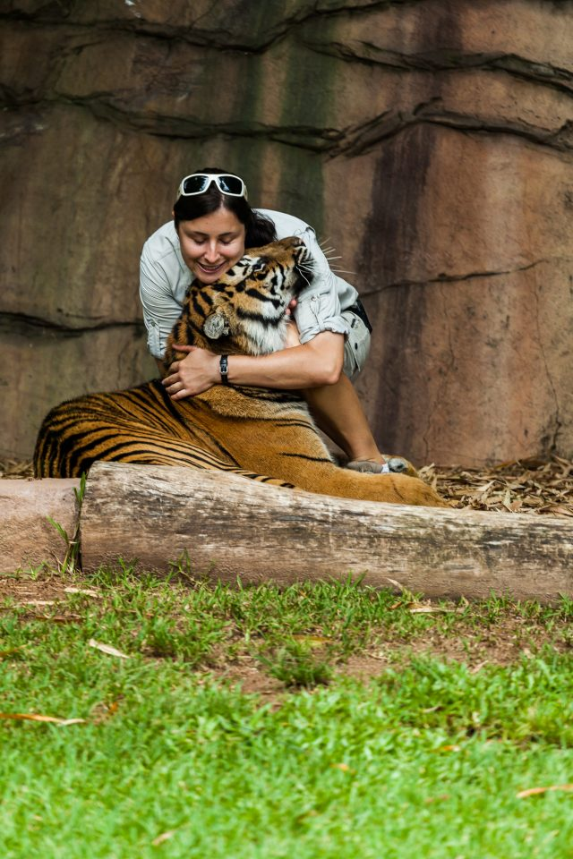 Trainer Hugging a Tiger Australia Zoo