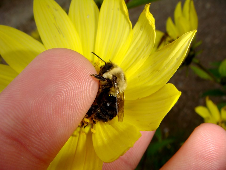 Finger and Bee
